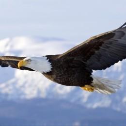 Libertad y determinismo